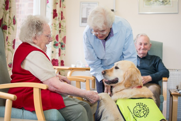 Can You Take Pets To A Care Home?